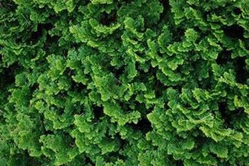 Soñar con Arbusto