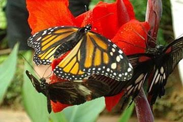 Soñar con Mariposa
