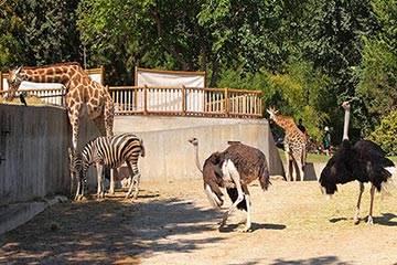 Soñar con Zoológico
